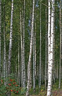 δέντρα συμήδας