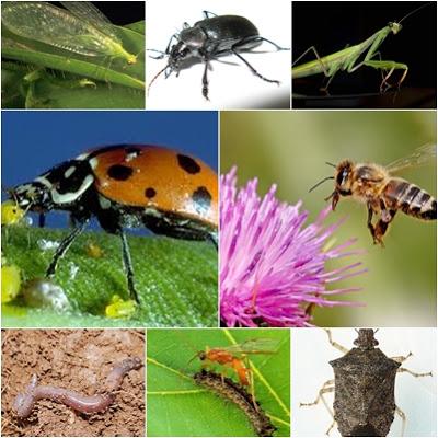 8 εξαιρετικά ωφέλιμα έντομα για τον κήπο