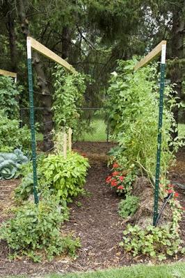 καλλιέργεια φυτών μέσα σε μπάλες σανό