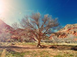 προστασία φυτών από καύσωνα