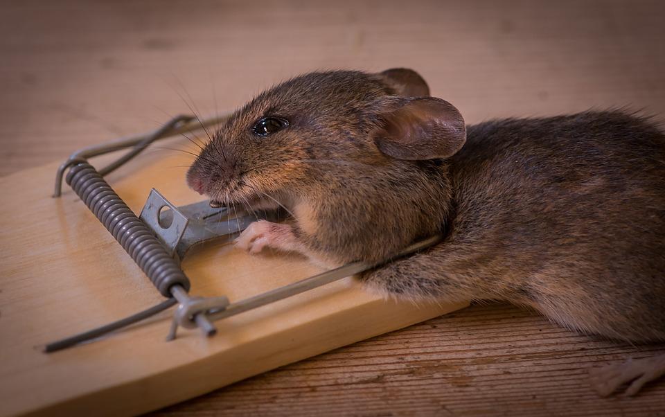 παγίδα για ποντίκια