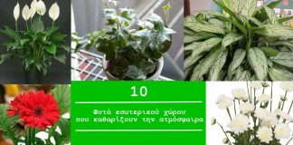 10 φυτά εσωτερικού χώρου που καθαρίζουν την ατμόσφαιρα