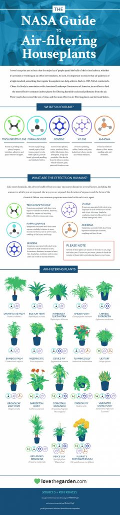 nasa-guide-to-air-filtering-houseplants