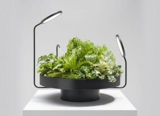 Μοναδικό συνδυασμός φυτών και φωτισμού