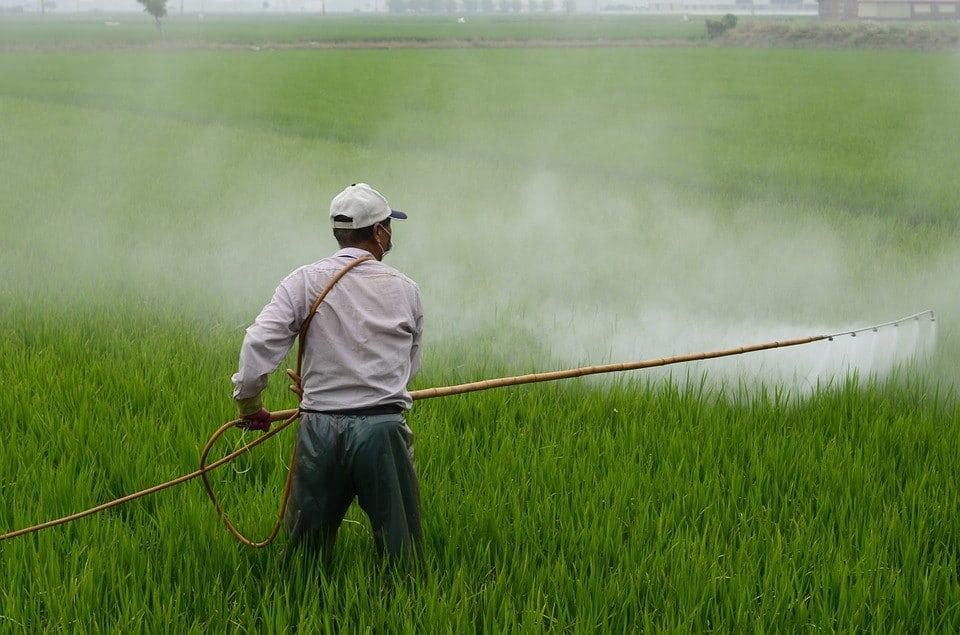 ψεκασμός ζιζανιοκτόνο σε ρύζι