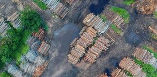 τιμές ξυλείας γιατί ακρίβυναν